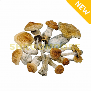 Shop for highly potent Penis Envy mushrooms online. Order shrooms from BC, Canada with fast shipping. Fresh psychedelic psilocybin mushrooms.