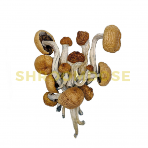 amazonians magic mushrooms for sale online.