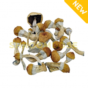 Find Penis Envy 6 shrooms for sale online right here. Fast free shipping in Canada. Texas Cubensis/Texas Penis Envy are highly potent shrooms. penis envy shrooms. buy penis envy mushroom strain online Canada. penis mushrooms for sale.